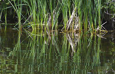 Photograph - Reeds Reflected In River by Lynn Hansen