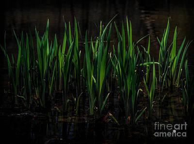 Photograph - Reeds by Ronald Grogan