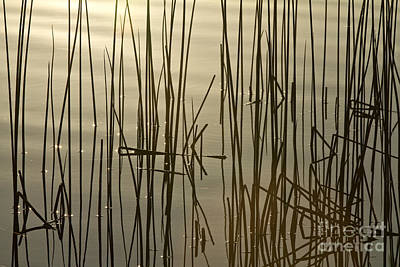 Photograph - Reeds by Stuart Gordon