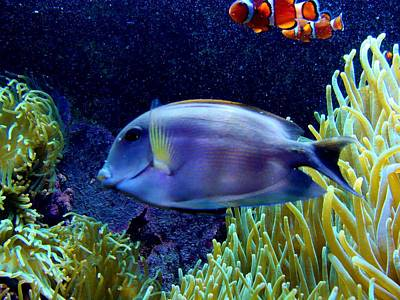 Photograph - Reef Fish by Anthony Seeker
