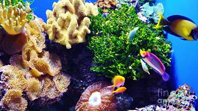 Art Print featuring the photograph Reef Life by Brigitte Emme