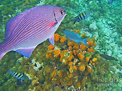 Fish On A Reef Painting - Reef Life by John Malone