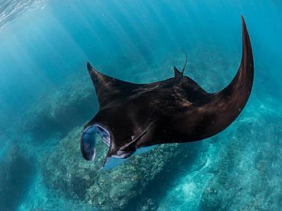 Reef Manta Ray At Nusa Penida In Indonesia Original