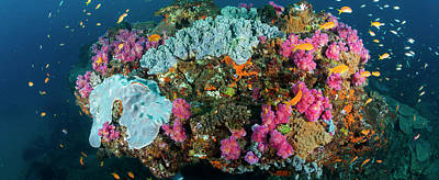 Of Sea Creatures Photograph - Reef Outcrop Encrusted With Colorful by Panoramic Images