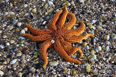Tangaroa Photograph - Reef Star by Gee Lyon