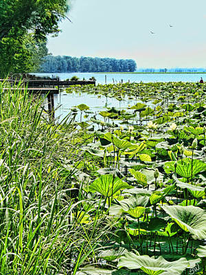 Reelfoot Lake Lilly Pads Art Print by Bonnie Willis