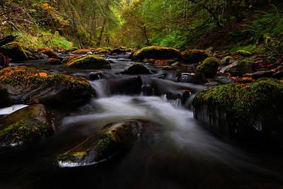 Photograph - Reelig Glen by  Gavin Macrae