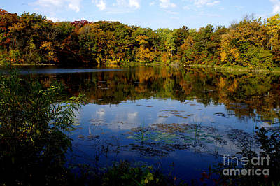 Photograph - Refection Fall At Ritter Park Lakeville Mn by Tina Hailey