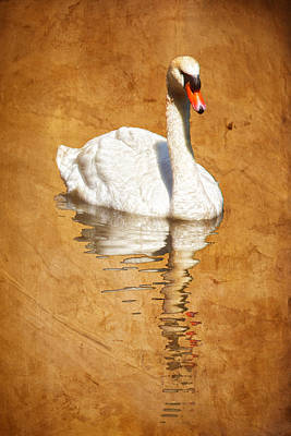 Photograph - Reflected Swan Warm Brown by Bob Coates