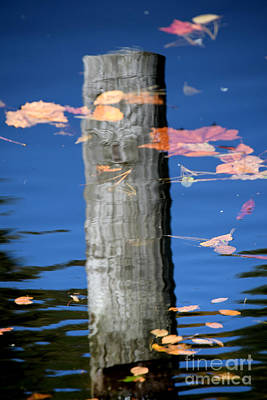 Photograph - Reflected Up by Gary Smith