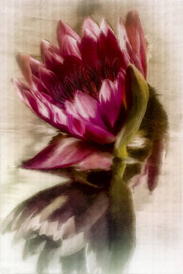 Digital Art - Reflected Waterlily by Jill Balsam