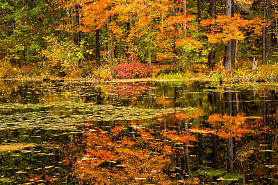 Of Autumn Photograph - Reflecting Colors by Karol Livote