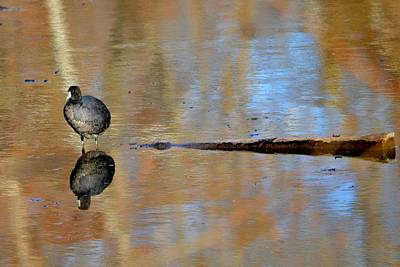 Photograph - Reflecting by Deena Stoddard
