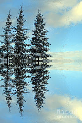 Photograph - Reflecting Evergreens In Winter by Nina Silver