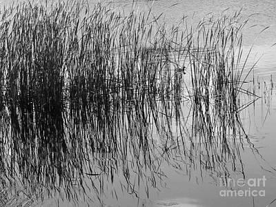 Claude Monet - Reflecting Grass by Marietjie Du Toit