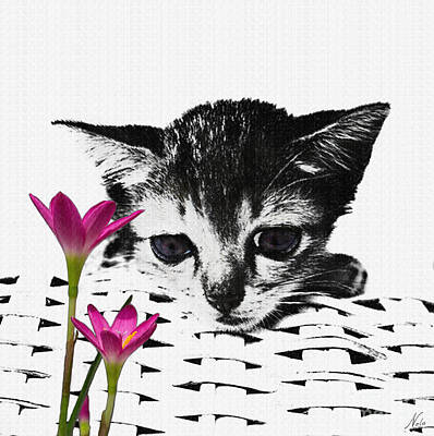 Photograph - Reflecting Kitten by Nola Lee Kelsey
