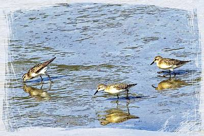 Reflecting Sandpipers Art Print by Constantine Gregory