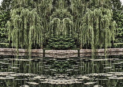 Photograph - Reflecting Willows by Rebecca Hiatt
