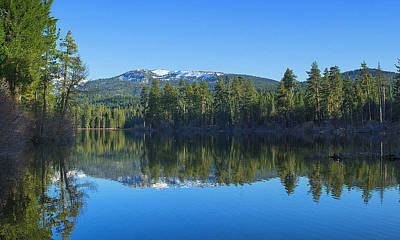 Photograph - Reflection In Manzanita by Rima Biswas