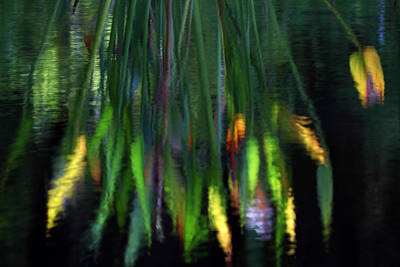 Photograph - Reflection In The Pond by James Eddy