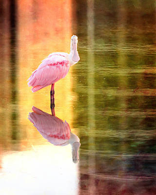 Spoonbill Wall Art - Photograph - Reflection Of A Roseate Spoonbill by Vicki Jauron
