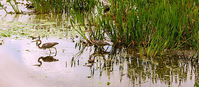 Reflection Of Cranes On Water, Boynton Art Print by Panoramic Images