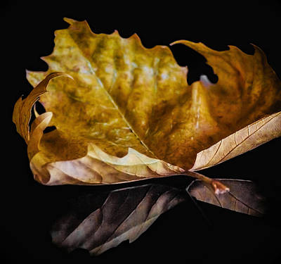 Photograph - Reflection Of Fall by Yvon van der Wijk