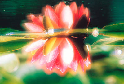 Reflection Of Flower In Pond, Lotus Print by Panoramic Images