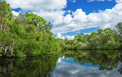 Oscar Scherer State Park Photograph - Reflection Of Trees On Water, South by Panoramic Images