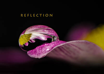 Photograph - Reflection by Tin Lung Chao