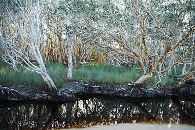 Photograph - Reflections At Tea Tree Lake by Ankya Klay