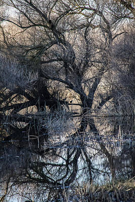 Art Print featuring the photograph Reflections by Brian Williamson