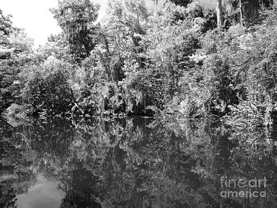 Louisiana Photograph - Reflections by Carey Chen