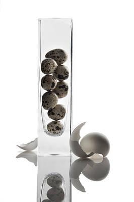 Photograph - Reflections - Eggs by Ovidiu Bastea