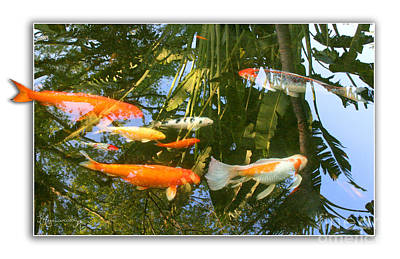 Reflections In A Koi Pond Art Print by Mariarosa Rockefeller