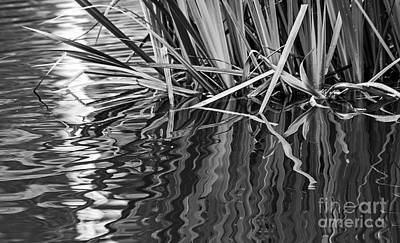 Photograph - Reflections In Black And White by Kate Brown