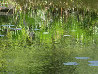 Reflections In Pond At Lunuganga Art Print