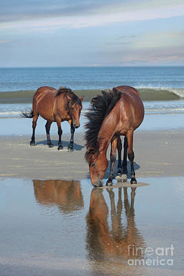 Glass Eyed Pony Photograph - Reflections by Lyndsey Warren