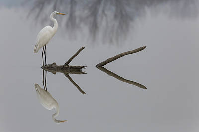 Herons Photograph - Reflections by Mauro Montuori