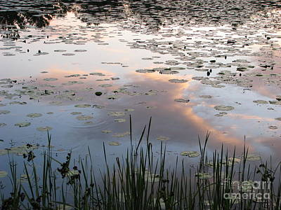 Reflections Art Print by Michael Krek