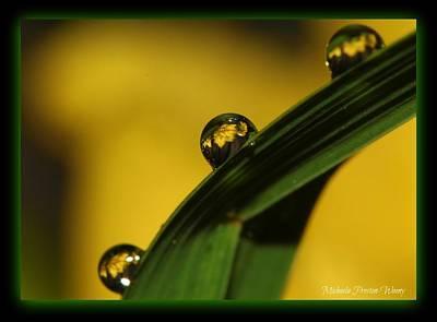 Photograph - Reflections by Michaela Preston