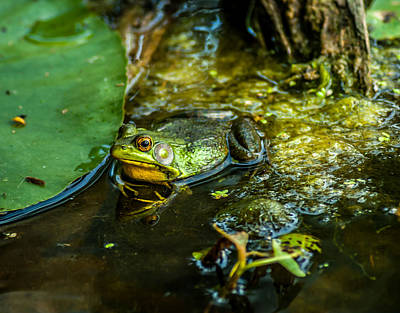 Reflections Of A Bullfrog Art Print by Optical Playground By MP Ray