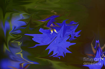 Abstract Flowers Royalty-Free and Rights-Managed Images - Reflections Of A Flower by Carol Lynch