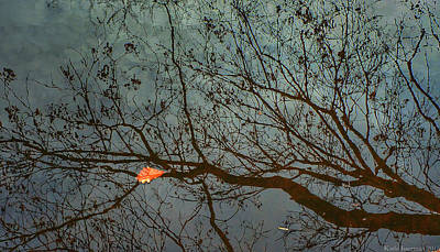 Photograph - Reflections Of A Leaf by Kathi Isserman