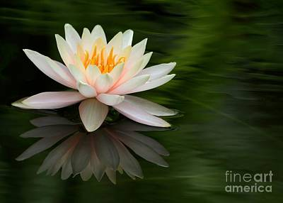 Photograph - Reflections Of A Water Lily by Sabrina L Ryan