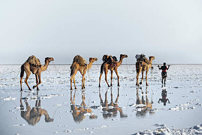 Camel Wall Art - Photograph - Reflections Of An Ancient Life by Trevor Cole