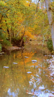 Photograph - Reflections Of An Autumn Day by Kay Novy