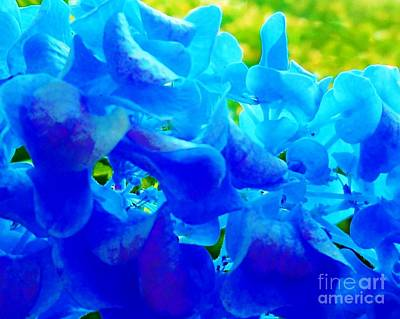 Mississippi Photograph - Reflections Of Blue Hydrangeas by Eloise Schneider