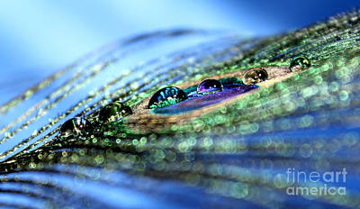 Peacock Photograph - Reflections Of Color by Krissy Katsimbras