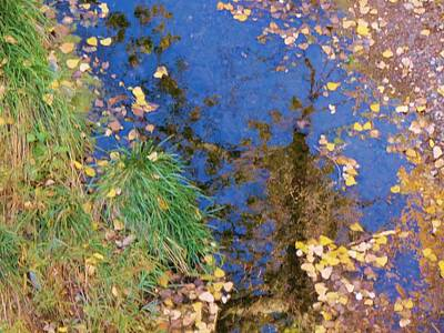 Reflections Of Fall Art Print by Feva  Fotos